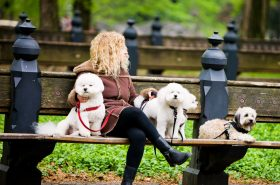 New York, USA - May 3, 2012: Woman with 4 dogs relaxing in Central Park, New York