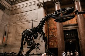American Museum of Natural History will continue with expansion plan